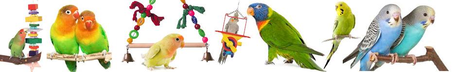 birdsbottom