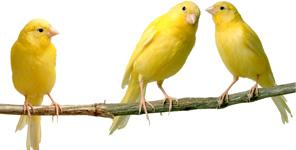 birdsextarpic